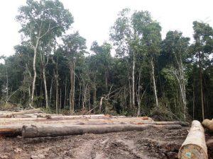 paulpavol_logging-op-wewak-turubu