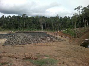 paulpavol_palm-oil-nursery-after-deforestation-security-story
